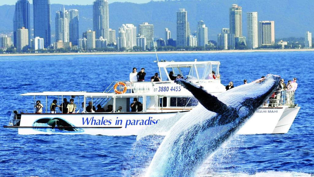Take Whale Watching Tours